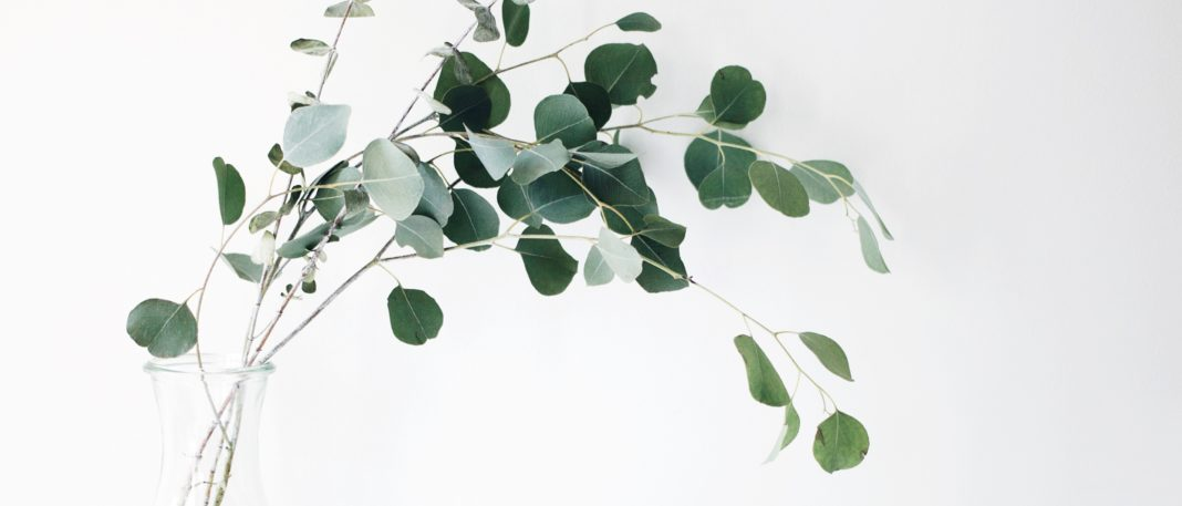 eucalyptus is sustainably harvested to make lyocell tencel fabric